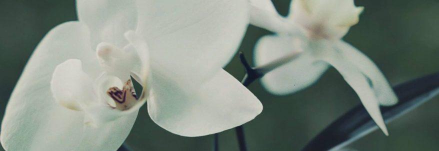 P.O.L.L.E.N. - Teaser Trailer